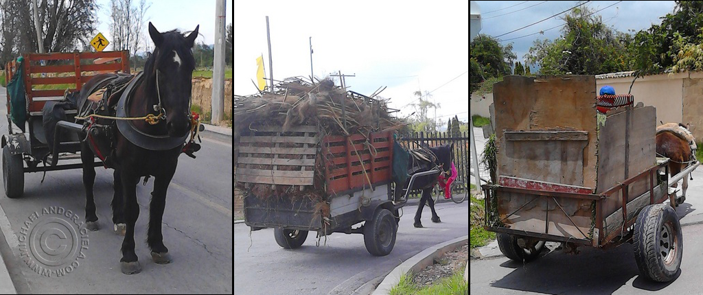 Horses and carts in Cajica Colombia