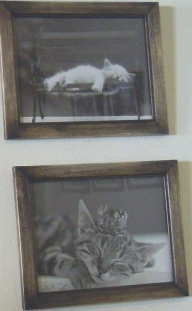 Felinos Cat photos 640 x 396